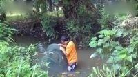 地笼捕鱼:一米来深的小溪里也有这么多的鱼