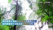 绝美航拍 广西发现一世界级天坑群 via澎湃新闻