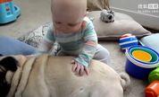 整个世界萌萌哒247:当你的小时候充满狗