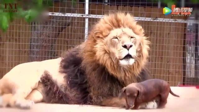 二零一七最新动物搞笑瞬间视频集锦