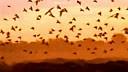 012.[Okavango_Africa's_Wild_Oasis].[神秘三角洲]