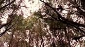 电影《仙境之桥》插曲《Valder Fields》