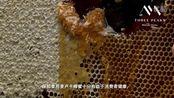 麦卢峰 麦卢卡蜂蜜:国际认证,顶级品质-蜂蜜 预告片