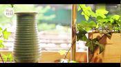 美女用杏鲍菇和它做了一道美食,清油解腻,肠胃不佳的人最爱吃~
