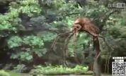 怪兽来了7期.巨型蚊子残害同类竟是人类好帮手