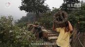 张家界武陵源11岁少年 骑着马儿去上学