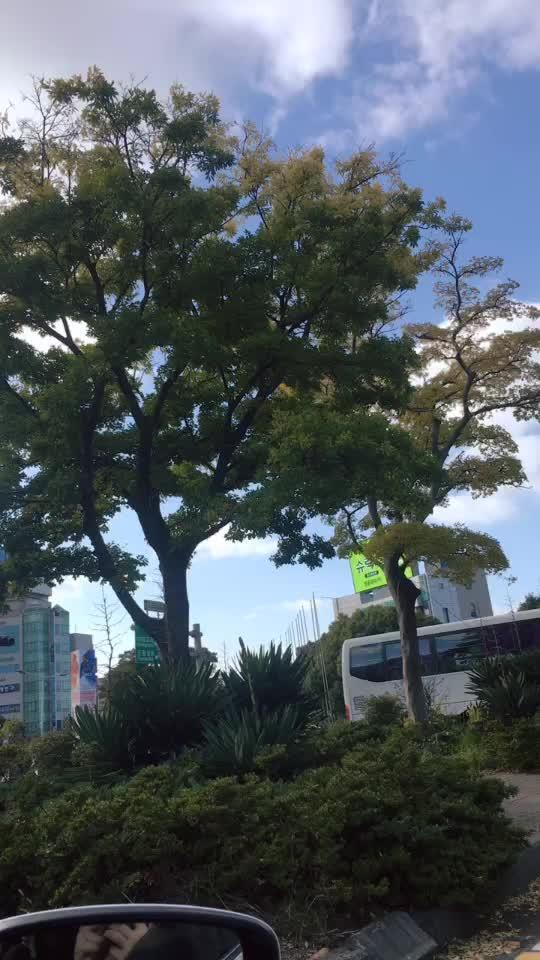 济州岛的街景~~