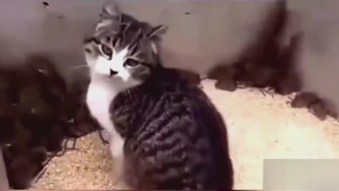 20170225期-太惨了!把猫丢进鼠窝后-资讯-高清正版视频-爱奇艺