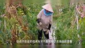 对华出口大跌,越南5G建设不用华为-成东南亚首个不用华为国家