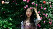 丽江小倩-《红蔷薇》我是好美好美的红蔷薇