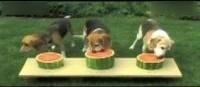 吃西瓜比赛视频 狗狗视频大全搞笑 狗狗吃西瓜大赛 搞笑宠物