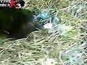 【www.898zt.com】一只猩猩抓到一只青蛙 看到青蛙嘴巴很大 然后青蛙悲剧了www.fanliy.com(流畅)