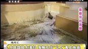 """水族馆放水清扫 海狮充当""""义工""""真皮拖地"""