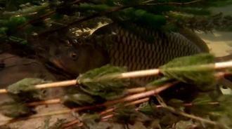 一条小溪里面居然可以藏着这么多鱼!