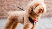 杭州集中严厉整治非法养犬,规定遛狗时间,不栓绳或将没收狗