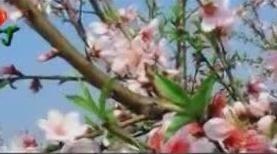 听醉了!朱晓琳《三月桃花雨》,让人充满了对春天向往