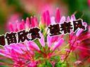 陶笛欣赏 望春风  演奏 罗杰
