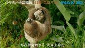 雪鹰领主少年Pi的奇幻漂流超清中文IMAX版预告片由上上签提供
