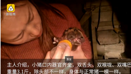 视频:母猪产下罕见怪胎 长2个头3只眼睛