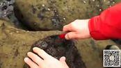 男子海滩游玩时发现奇异的石头 切开后惊喜万分