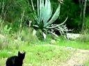 小猫与猫头鹰竟然是最好的朋友 www.pinsew.com