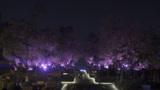 夜登白云山,直击火爆灯光节:今年白云山有什么亮点,快来看看!