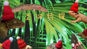 VLOG.51 2019年12月24日 小家伙们的圣诞特辑 (守宫/蓝舌/鬃狮/蝾螈/香蕉/猫咪)