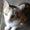 甘孜藏族自治州吴琦摄影 2019.10.17-旅游-高清完整正版视频在线观看-优酷
