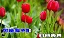 梦之旅《红莓花儿开》(伴奏)