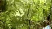 新闻短片《世界第三高瀑布》_标 www.tech-pac.com 1.76复古传奇