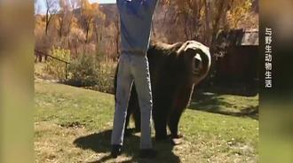 老外在野外捡到一只黑熊,把他带回家中当作宠物来饲养