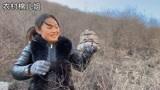 农村媳妇去深山找奇石,没想到偶遇极品山峰,真是可遇不可求