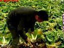 在中国的故事-20101220 黑龙江 哈尔滨