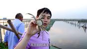 阳澄湖大闸蟹捕捉现场实拍,当地人教你辨别阳澄湖大闸蟹的真假!