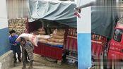 小张家玉米被猪吃完了,大车拉来5吨玉米,邻居都来帮忙搬玉米