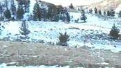 我住在大山里,这里是我可爱的家乡,也有我无比宠爱的动物,其中我最喜欢的是鹿,亲你的宠物是什么呢?