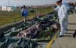 伊朗公布乌坠机事故初步报告:飞至8000英尺 数据从雷达消失