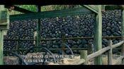 电视诗歌散文《我伴梅雨画个愁》 作者:张科(重庆)1
