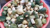 实拍云南曲靖农村小集市,有各种各样的野生菌,都是山中珍品