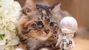 【猫奴工作室】小喵花花懵逼记╮(╯▽╰)╭把kuro放在黑幕布下..???...