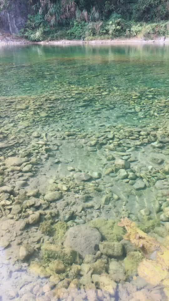 家乡的小溪 清澈见底