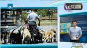杭州将重新修订养犬管理法规调整遛狗时间