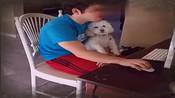 当主人伤心的时候,一旁的狗狗看到之后也......