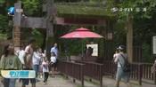 武夷山景区恢复开放!迎来首批游客,今日游客总数接近万人