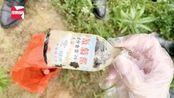 吃货哭了!熊孩子买农药毒死千斤小龙虾,因放假在家太闲无事可做