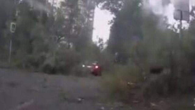 实拍大风肆虐将三颗大树吹倒
