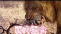 恐怖动物世界-狮子VS豹子
