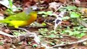 毒蛇栽在一只小鸟手上,动物界耻辱