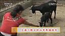 上海三胜EM原液 云岭山羊养殖技术