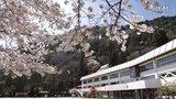 【GUMI】桜咲く季節【一ノ瀬みやび】